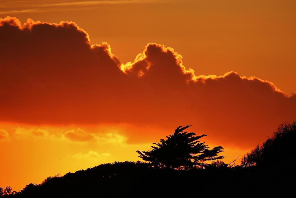 Tree in orange by Dieffi