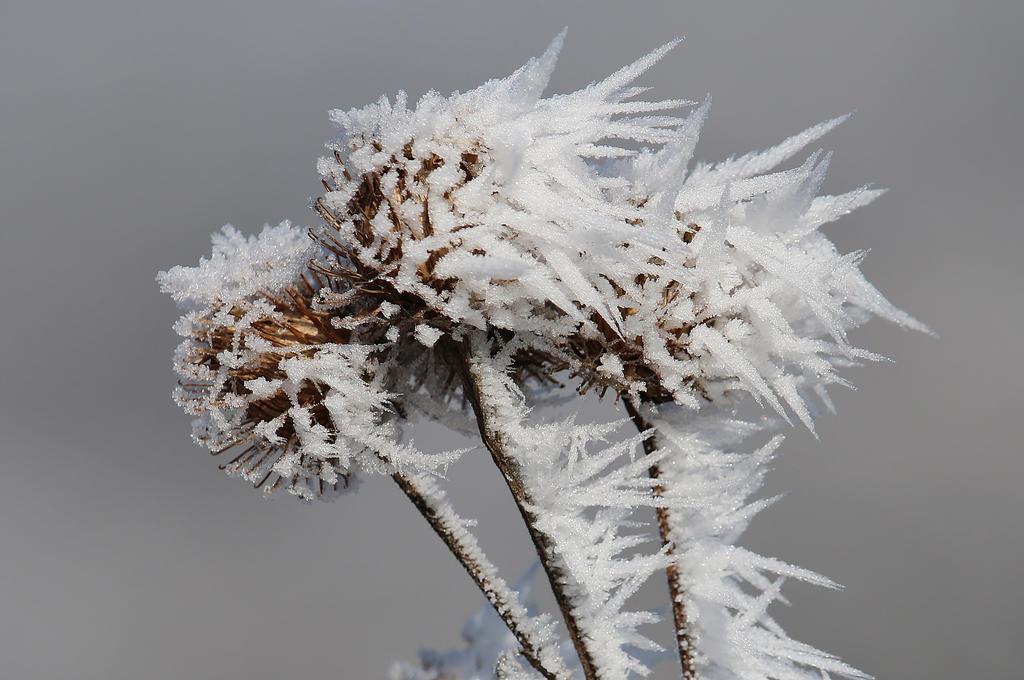frozen fog by Dieffi