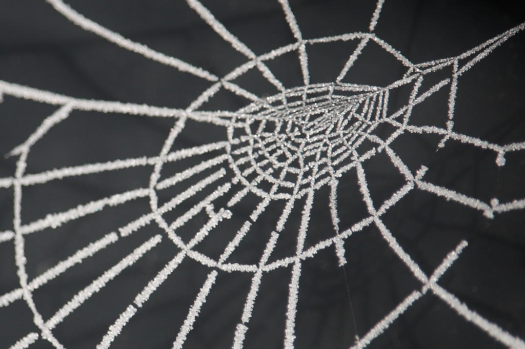 White Web by Dieffi