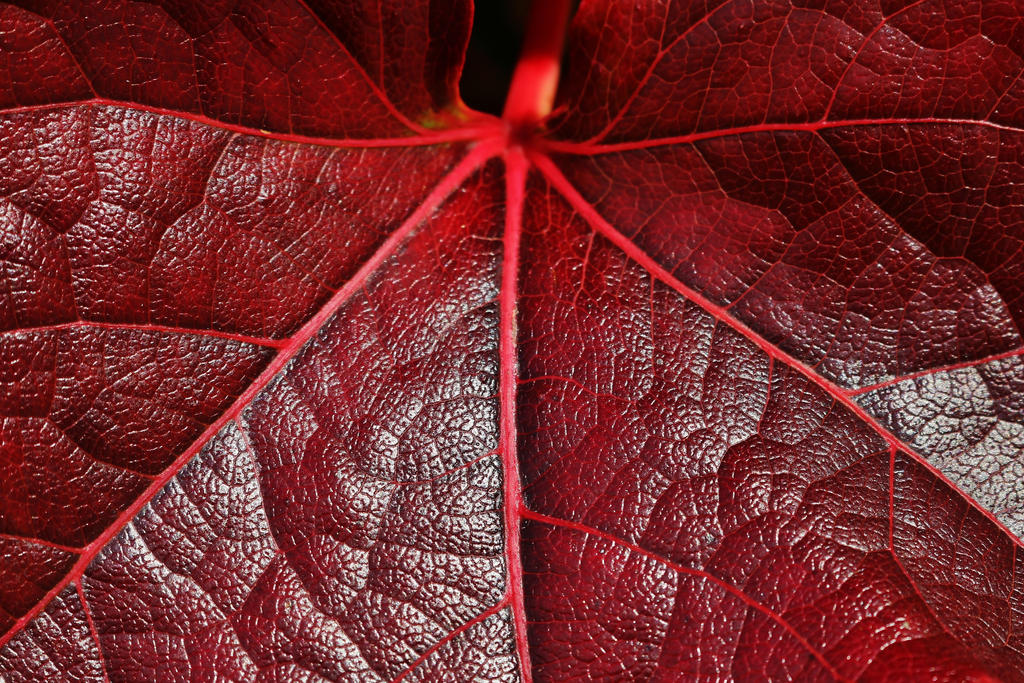 autumnal lines by Dieffi