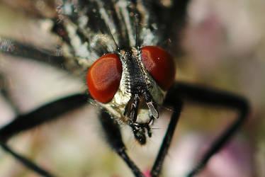 big red eyes by Dieffi