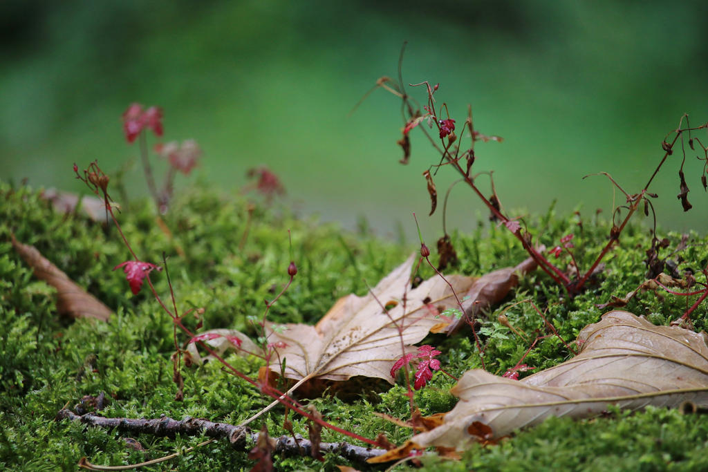 forest flor by Dieffi