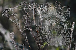 SPIDERWEB 3 by Dieffi
