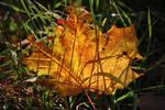 autumnal shadows