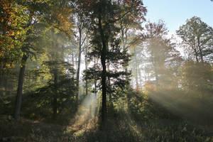 misty morning by Dieffi