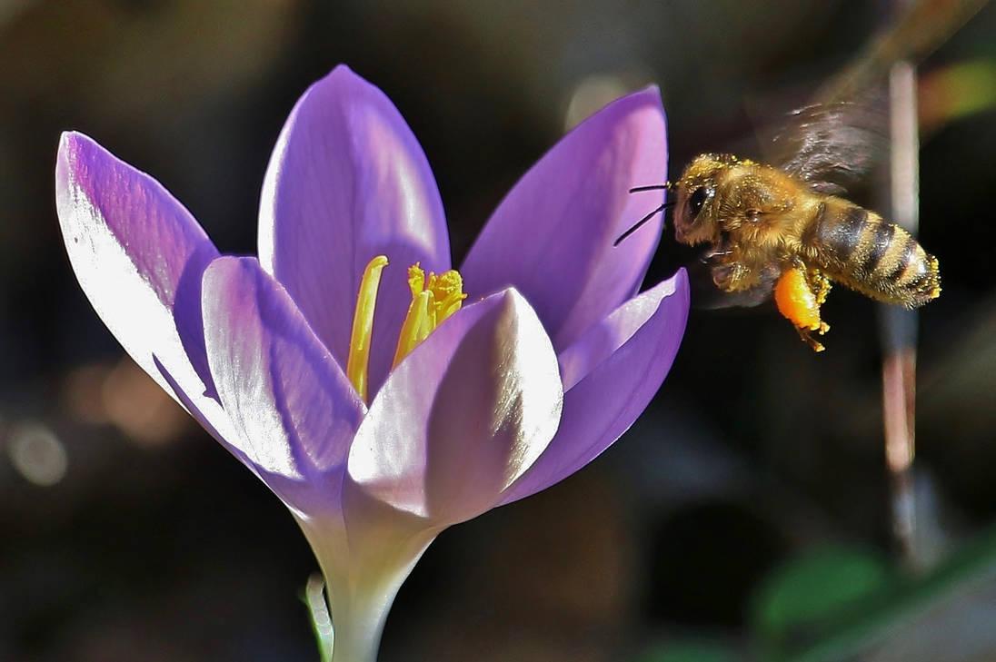 spring attack by Dieffi