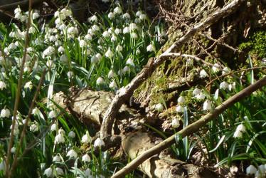 forest ground in spring by Dieffi