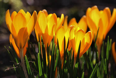 sunshine yellow by Dieffi