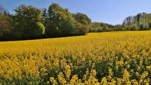 Yellow April
