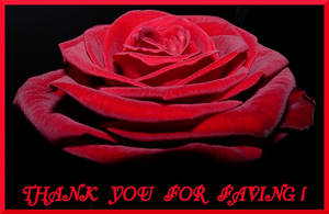 THANK YOU FOR FAVING - ROSE