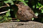 dry bird