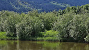 river in green