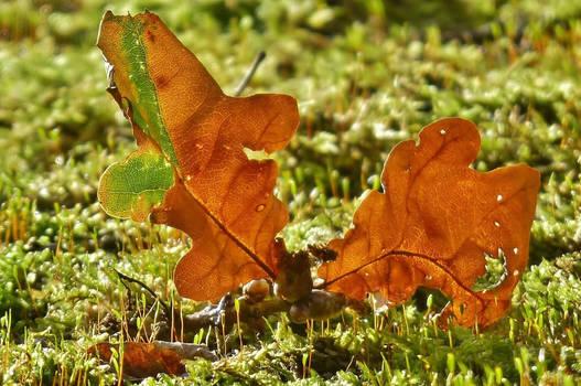 fallen in moss