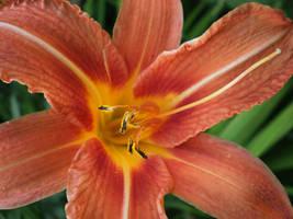 little beauty by she-is-so-fly