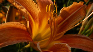 orange by she-is-so-fly
