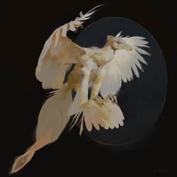 Archaeopteryx on Black