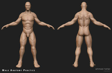 Male anatomy practice by Ahmed-Taher