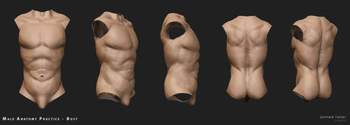 Male Bust study by Ahmed-Taher