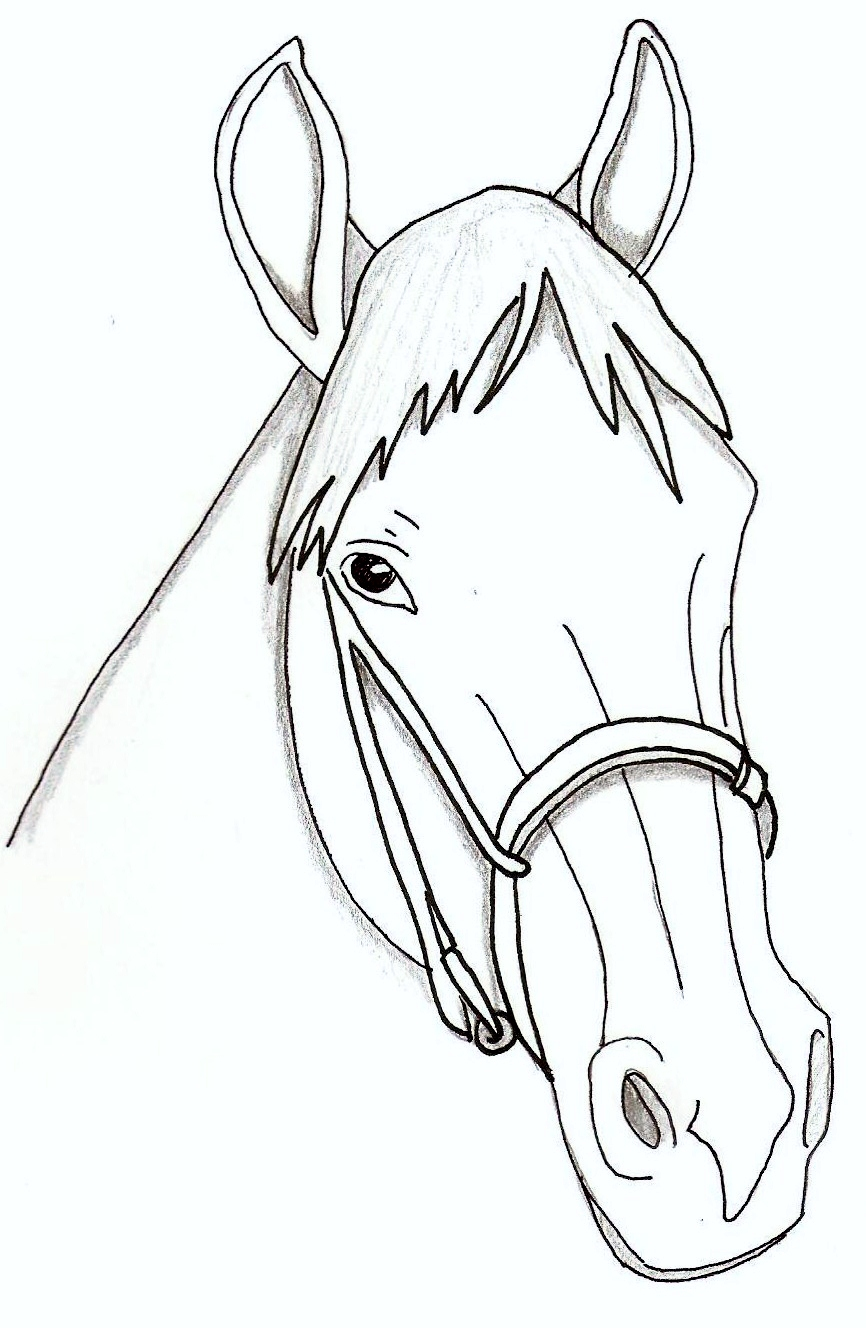 Horse head coloring page - animalcarecollege.info