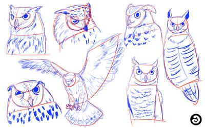 Research: Owl reference by LACardozaRojas