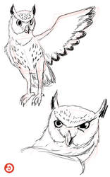 Research: Owl by LACardozaRojas