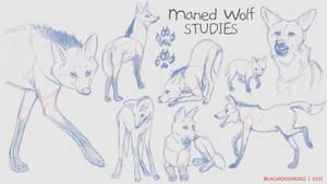 Maned Wolf Studies