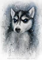 little husky by MeduZZa13