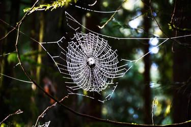 The Web by Felewin
