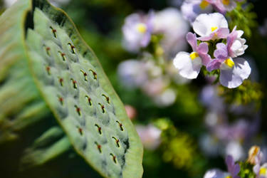 Flower Forms by Felewin