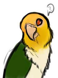 squawk by m0rtuum