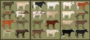 Doon Cattle Sale! OPEN