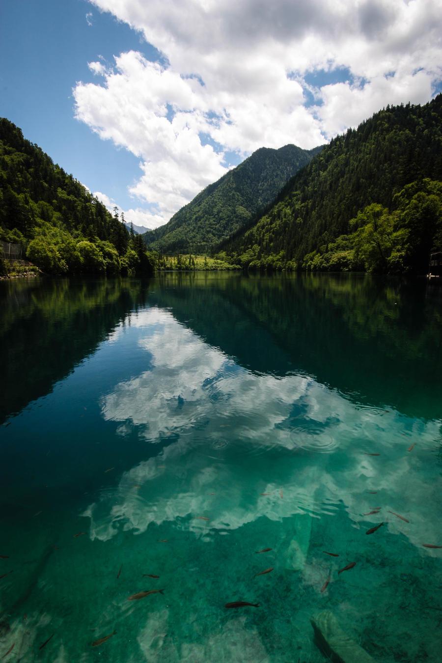 Jiuzhaigou - Panda Lake by stinebamse