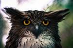 Owl by stinebamse