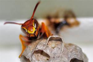 Wasp by JakeMunoz