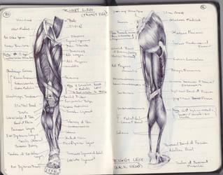 Study: Leg Musculature by SketchbookNoir