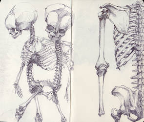 Siamese Twin Fetal Skeleton by SketchbookNoir