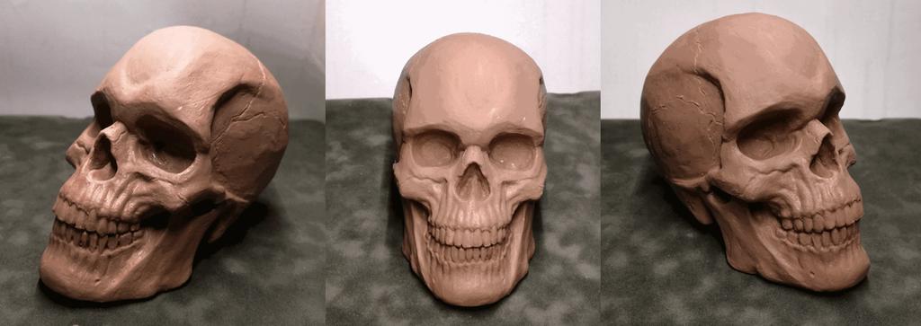 Human skull study by veluvelu