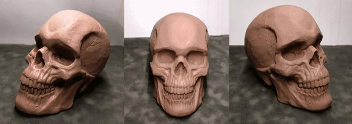Human skull study