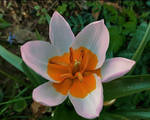 its another flower