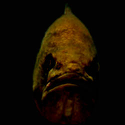 BassFish 4