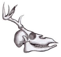 Deer skull practice