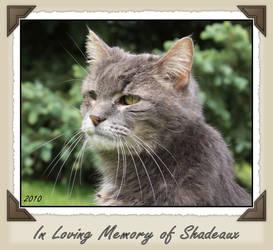 In Loving Memory of Shadeaux by eyesofhumor