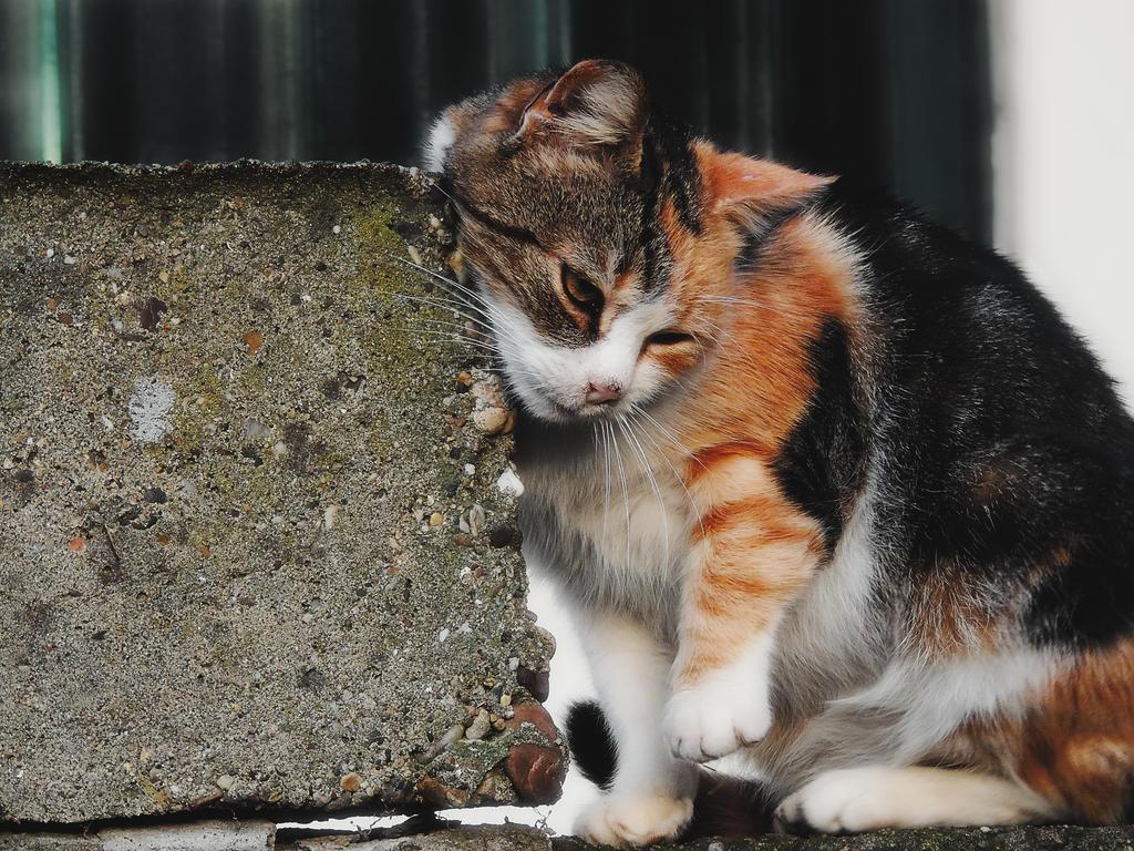Cat by TeeKeeuS87