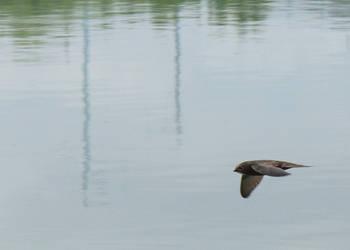 Watoo Watoo Super Bird by greenday-ra