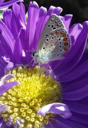 Beauty inside a flower