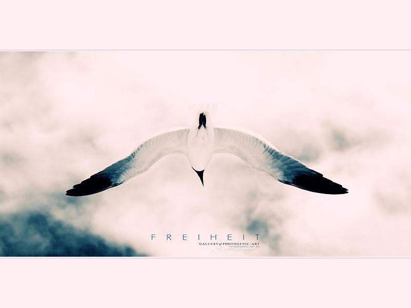 Freiheit - Freedom II