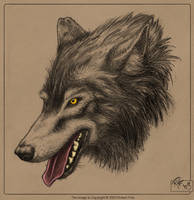 Lifestudy - Wolf by BluntieDK