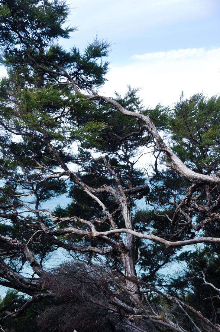 beach wood by chipongo