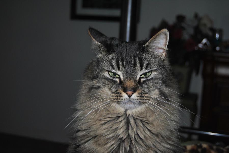 libertine1182's Profile Picture