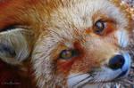 Wild Eyes by CanonSX20
